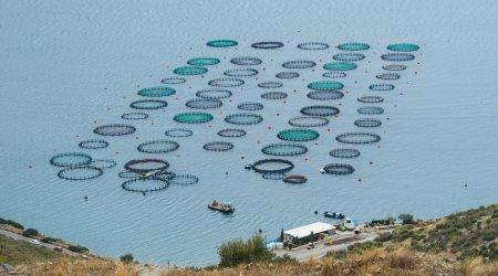 Fiskeindustri:Ventilation og beluftning af kommercielle fiskebassiner